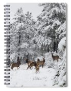Elk In Deep Snow In The Pike National Forest Spiral Notebook