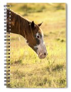 Horse In The Countryside  Spiral Notebook