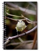 9343-00-ruby-crowned Kinglet Spiral Notebook