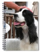 #940 D1041 Farmer Browns Springer Spaniel Good Girl Good Boy Attaboy Spiral Notebook