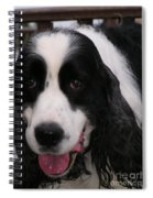 #940 D1049 Farmer Browns Springer Spaniel Spiral Notebook