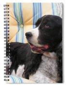 #940 D1054 Farmer Browns Springer Spaniel Spiral Notebook