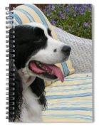 940 D1069 Farmer Browns Springer Spaniel Spiral Notebook