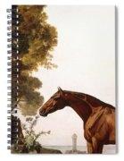 A Bay Arab In A Coastal Landscape Spiral Notebook