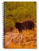 A Bear Staring At Something Spiral Notebook