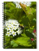 A Bee And A Fly Meet On A Flower Spiral Notebook