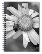 A Beetle And A Daisy  Spiral Notebook