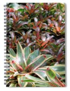 A Bevy Of Bromeliads Spiral Notebook