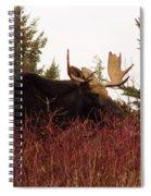 A Big Fierce-eyed Bull Moose Spiral Notebook