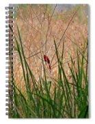 A Bit Of Red Spiral Notebook
