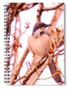 Western Scrub Jay Spiral Notebook