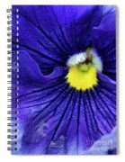 A Blue Pansy Spiral Notebook