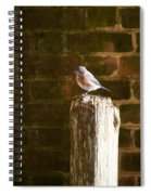 A Bluebird At The Governor's Palace Gardens Spiral Notebook