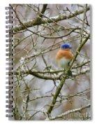 A Bluebird  Spiral Notebook