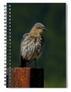 A Bluebird Welcome Spiral Notebook