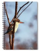 A Brown-hooded Kingfisher  Spiral Notebook