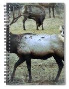 A Bull Elk  Spiral Notebook