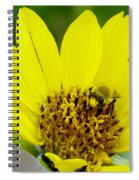 A Bumble Hunkering Down Spiral Notebook
