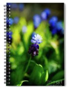A Bunch Of Flowering Two-tone Grape Hyacinths, No.2. Spiral Notebook
