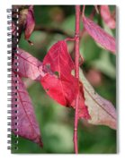 A Bunch Of Red Leaves Spiral Notebook