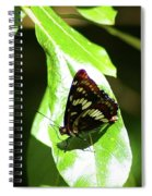 A Butterfly In The Sun  Spiral Notebook