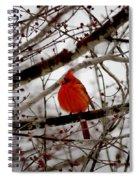 A Cardinal In Winter Spiral Notebook