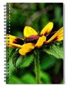 A Carrot Spiral Notebook