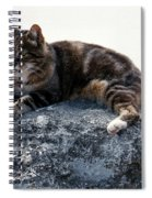 A Cat From Rome Spiral Notebook