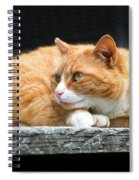 A Cat Named 'kitty' Spiral Notebook