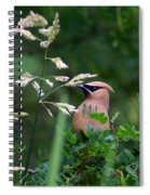 A Cedar Waxwing Facing Left Spiral Notebook