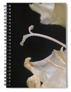 A Centered Focus Spiral Notebook