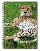 A Cheetah Resting On The Grass Spiral Notebook