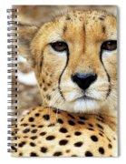 A Cheetah's Portrait Spiral Notebook