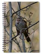 A Chipping Sparrow Spiral Notebook
