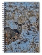 A Christmas Day Young Buck Spiral Notebook