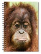 A Close Portrait Of A Sad Young Orangutan Spiral Notebook