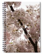 A Cloud Of Pastel Pink Cherry Blossoms Celebrating The Arrival Of Spring  Spiral Notebook