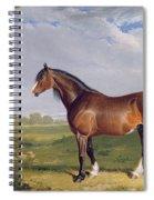 A Clydesdale Stallion Spiral Notebook
