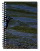 A Common Grackle Spiral Notebook