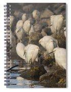 A Congregation Of Egrets Spiral Notebook