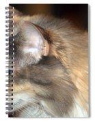 A Contemplative Little Princess Spiral Notebook