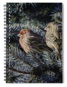 A Couple Of House Finch Spiral Notebook