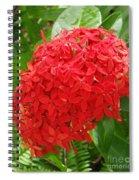 A Crown Of Ixora Spiral Notebook