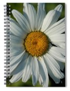 A Daisy A Day Spiral Notebook