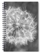 A Dandelion Black And White Spiral Notebook