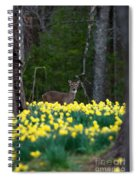 A Deer And Daffodils 4 Spiral Notebook