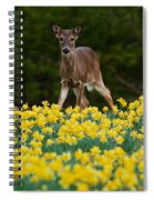 A Deer And Daffodils IIi Spiral Notebook