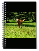 A Dogs Freedom Spiral Notebook