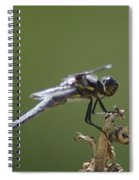 A Dragon Fly Contemplating  Spiral Notebook