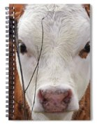 A Face You Can Love - Cow Art #609 Spiral Notebook